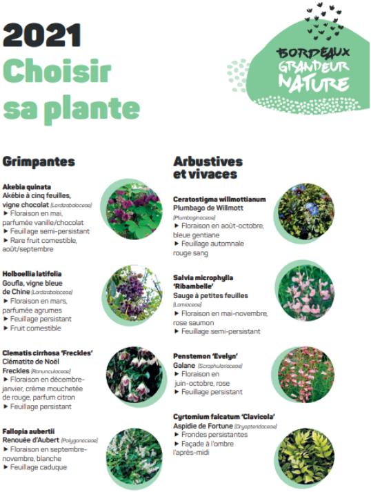 Plantes fournies par Bordeaux Grandeur Nature.